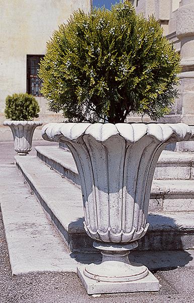 151 d vaso lilium lonardi tutto per il giardino for Lilium in vaso