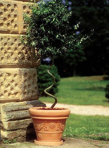 Vaso festonato in resina vasi in resina e in plastica da esterno e da interno vendita - Vasi da esterno plastica ...